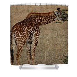 Giraffes Eating - Side View Shower Curtain