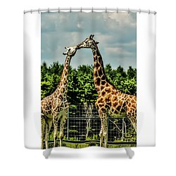 Giraffes Necking Shower Curtain
