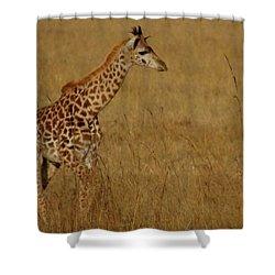 Giraffes On A Walk 2 Shower Curtain