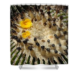 Giving Birth Barrel Cactus Yellow Flowers Shower Curtain