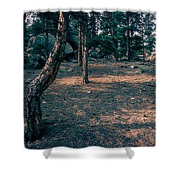 Glade In The Forest Of Colorado Shower Curtain