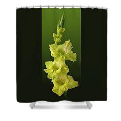 Glads Shower Curtain
