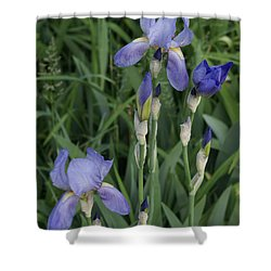 Glads Shower Curtain by Cynthia Powell
