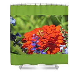 Glances Of Summer - Images From The Garden Shower Curtain