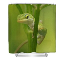 Glaring Lizard Shower Curtain by Paul  Wilford