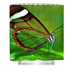 Shower Curtain featuring the photograph Glasswinged Butterfly by Ralph A Ledergerber
