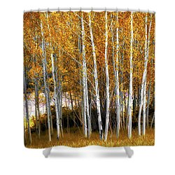 Gleaming Fall Aspens Shower Curtain