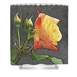 Glenn's Rose 2 Shower Curtain by Michael Peychich