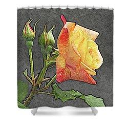 Glenn's Rose 2 Shower Curtain by Michael Peychich