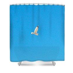 Gliding Seagull Shower Curtain