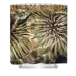 Shower Curtain featuring the photograph Glistening by Colleen Coccia