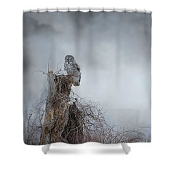 Gloomy Sunday  Shower Curtain by Heather King