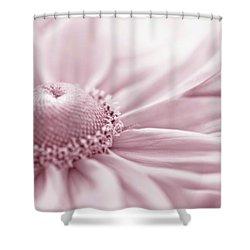 Gloriosa Daisy In Pink  Shower Curtain