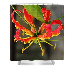 Gloriosa Lily Shower Curtain