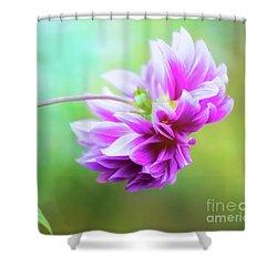 Glorious Autumn Dahlia Shower Curtain