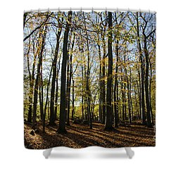 Shower Curtain featuring the photograph Glorious Forest by Kennerth and Birgitta Kullman