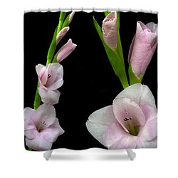 Glorious Gladiolus. Shower Curtain