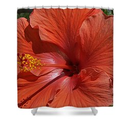 Glorious Hibiscus Shower Curtain