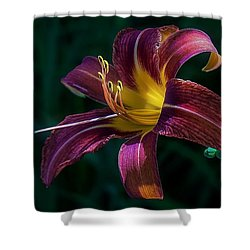Shower Curtain featuring the photograph Glorious by Kendall McKernon