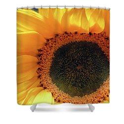 Glorious Sunflower Shower Curtain
