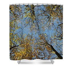 Shower Curtain featuring the photograph Glorious Tree Tops by Kennerth and Birgitta Kullman