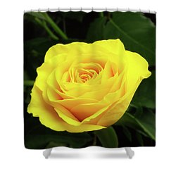 Glorious Yellow Rose Shower Curtain