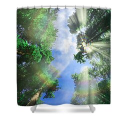 Glory Amongst Redwoods Shower Curtain