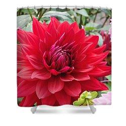 Glory Crimson Dahlia  Shower Curtain