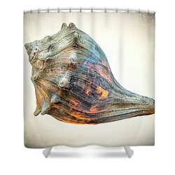 Shower Curtain featuring the photograph Glowing Conch Shell by Gary Slawsky