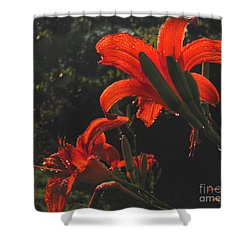 Shower Curtain featuring the photograph Glowing Day Lilies by Donna Brown