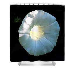 Glowing Morning Glory Shower Curtain by Karen Molenaar Terrell