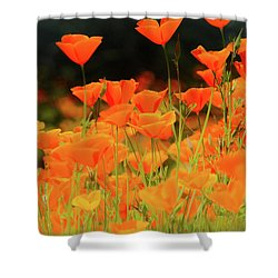 Glowing Poppies Shower Curtain