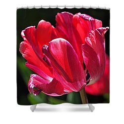 Glowing Red Tulip Shower Curtain by Rona Black