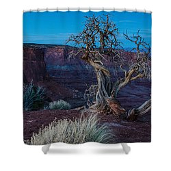 Gnarled Shower Curtain