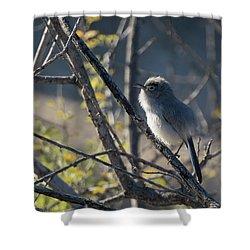 Gnatcatcher Shower Curtain