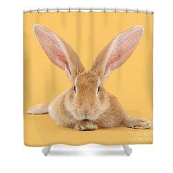 Go Ahead I'm All Ears Shower Curtain