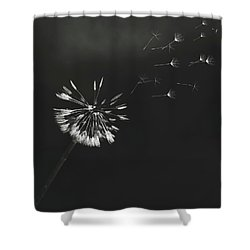 Go Forth Bw Shower Curtain by Heather Applegate
