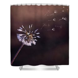 Go Forth Fall Shower Curtain by Heather Applegate