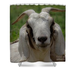 Goat 1 Shower Curtain