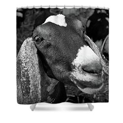 Goat Shower Curtain