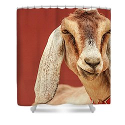Goat With An Attitude Shower Curtain