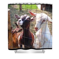 Shower Curtain featuring the photograph Goats by Felipe Adan Lerma