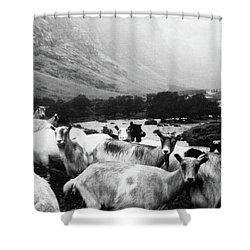 Shower Curtain featuring the mixed media Goats In Norway- By Linda Woods by Linda Woods