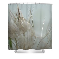 Goatsbeard Seedhead Shower Curtain by Aliceann Carlton