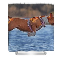 Going For A Swim  Shower Curtain by Brian Cross