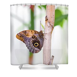 Shower Curtain featuring the photograph Gold And Brown Butterfly by Raphael Lopez