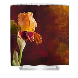 Gold And Red Iris Shower Curtain