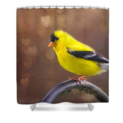 Shower Curtain featuring the photograph Gold Finch Love by Mary Timman