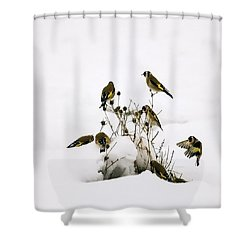 Gold Finches In Snow Shower Curtain