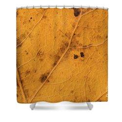 Gold Leaf Detail Shower Curtain
